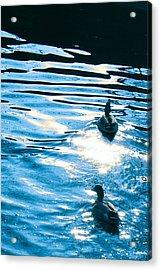 Ducks At Twilight Acrylic Print by Ginny Gaura