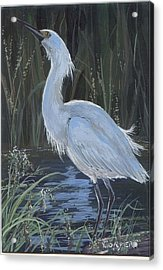 Egret Acrylic Print by Peggy Conyers