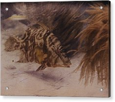 Example Of First Underwater Photography Acrylic Print by W. H. Longley And Charles Martin