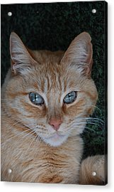 Fat Cats Of Ballard 5 Acrylic Print