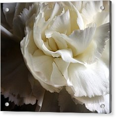Acrylic Print featuring the photograph Flower Beauty by Deniece Platt