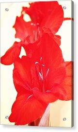 Gladiola Stem Acrylic Print by Cathie Tyler