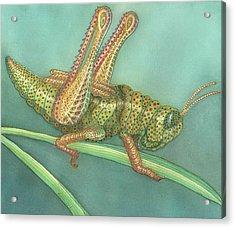 Grasshopper Acrylic Print by Anne Havard