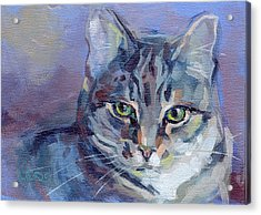 Green Eyed Tabby - Thomasina Acrylic Print by Kimberly Santini
