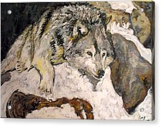 Acrylic Print featuring the painting Grey Wolf Resting In The Snow by Koro Arandia