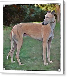 Greyhound Standing Rendered 103 Acrylic Print by Terry Mulligan