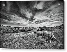 Heather Hills I Acrylic Print