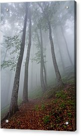 High Forest Acrylic Print by Evgeni Dinev