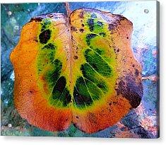 Hippie Leaf Acrylic Print by Beth Akerman