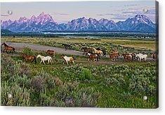Horses Walk Acrylic Print by Jeff R Clow