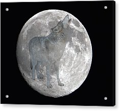 Howl At The Moon Acrylic Print