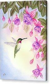 Hummingbird With Fuchsia Acrylic Print by Leona Jones