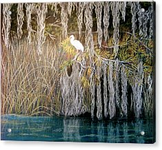 Acrylic Print featuring the pastel Ibis At Wakulla Springs by Jan Amiss