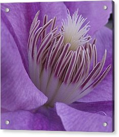 Inner Beauty Acrylic Print by Erika Kennedy