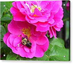 Jc And Bee Acrylic Print by Mary-Lee Sanders