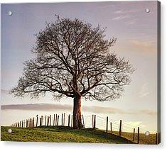 Large Tree Acrylic Print by Jon Baxter