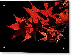 Leaves Of Red Acrylic Print by Heather Applegate