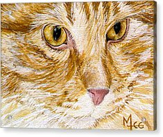 Leo Acrylic Print by Mary-Lee Sanders