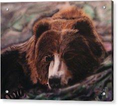 Let Sleeping Bears Lie Acrylic Print by Frank  Bingo