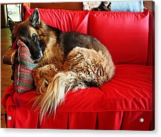 Let Sleeping Dogs Lie Acrylic Print by Pat Purdy