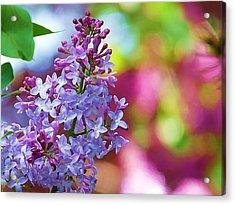 Lilacs 2012 Acrylic Print