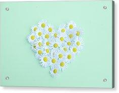 Little Daisy Acrylic Print by Poppy Thomas-Hill