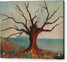 Lone Oak - Gulf Coast Acrylic Print by Deborah Allison
