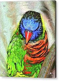 Lorikeet Acrylic Print