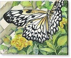 Love Is Like A Butterfly Acrylic Print by Marsha Elliott