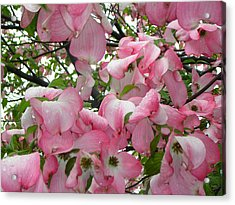 Magnolias Acrylic Print by Heather Weikel
