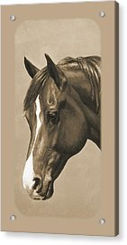 Morgan Horse Phone Case In Sepia Acrylic Print by Crista Forest