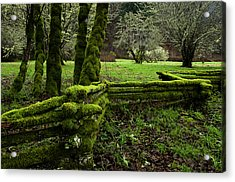 Mossy Fence 2 Acrylic Print by Bob Christopher