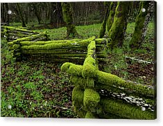 Mossy Fence 4 Acrylic Print by Bob Christopher