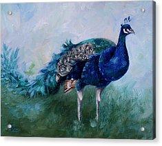 Mr. Peacock  Acrylic Print