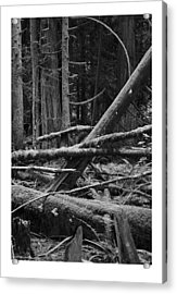 Natural Forest Acrylic Print by J D Banks