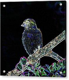 Neon Goldfinch Acrylic Print by Betty LaRue