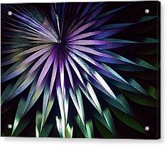 Night Bloom Acrylic Print by Photo ephemera