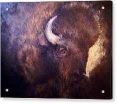 Old Bison Acrylic Print by Joann Shular
