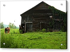 Old Stable And Horses Acrylic Print