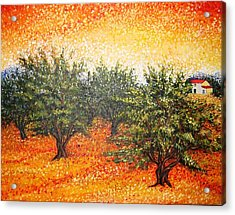 Olive Field In The Sunset Acrylic Print