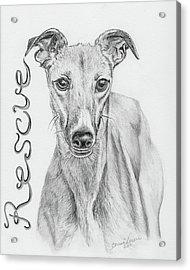 Petunia Acrylic Print by Teresa Vecere