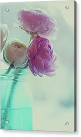 Pink And White Ranunculus Flowers In Vase Acrylic Print by Isabelle Lafrance Photography