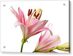 Pink Lilies 03 Acrylic Print by Nailia Schwarz