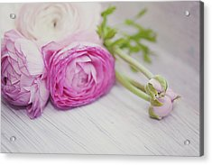 Pink Ranunculus Flowers On White Wooden Shelf Acrylic Print by Isabelle Lafrance Photography