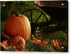 Pumpkins In The Grass Acrylic Print by Sandra Cunningham