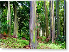 Rainbow Eucalyptus Acrylic Print by Monica and Michael Sweet