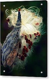 Release The Seed Milkweed Acrylic Print