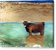 Acrylic Print featuring the pastel Scottish Highland Bull by Jan Amiss