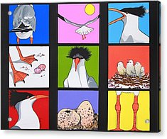 Sea Bird Kaleidoscope Acrylic Print by Renata Wright