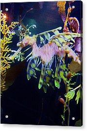 Sea Horse Parade 2 Acrylic Print